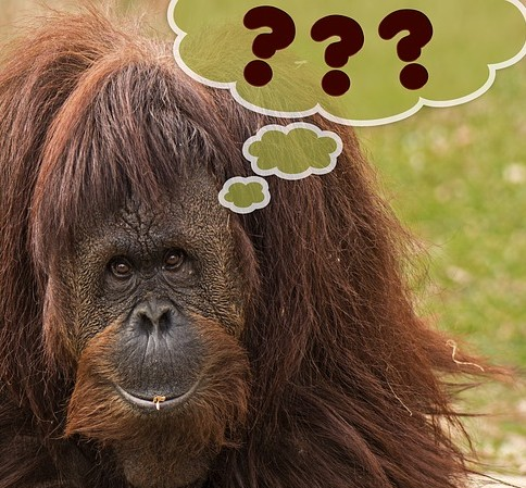 primate-460871_640